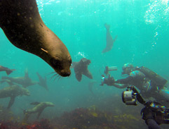 Diving with seals