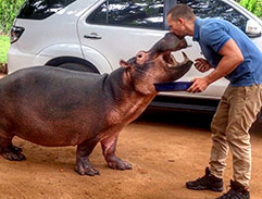 Top Billing explores Limpopo & meets Jessica the hippo