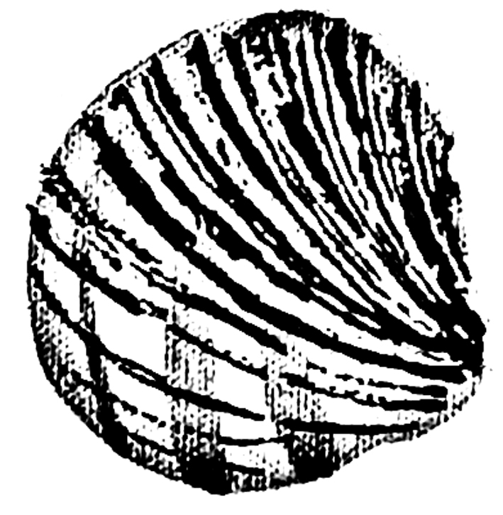 Shell Stencil Download