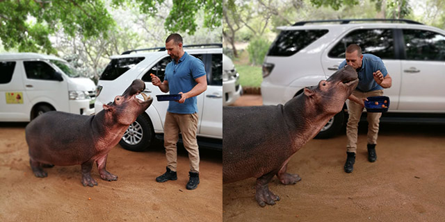 Top Billing explores Limpopo and meets Jessica the hippo 2